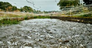 Bassin de pisciculture avec remous de truites